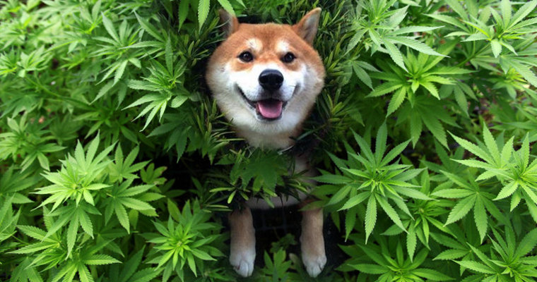 cool doggo